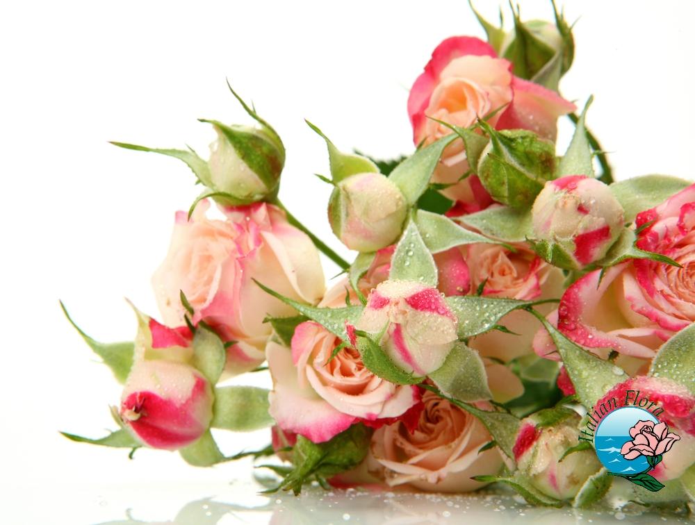 Regalare una composizione di fiori può rivelarsi una scelta giusta per molte occasioni.