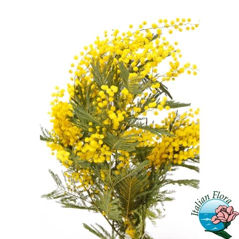Regalare dei fiori per l'8 Marzo: la Festa della donna
