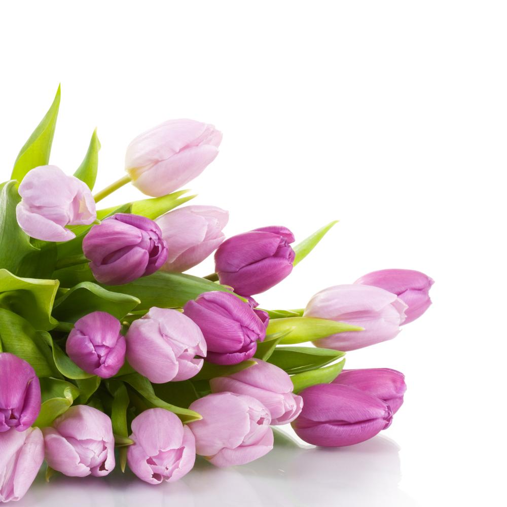 I Tulipani e il significato dei suoi vari colori