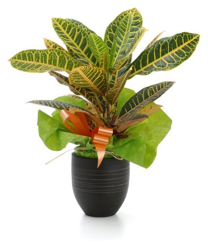Le piante verdi più belle per il vostro terrazzo o balcone