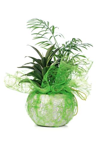 Come abbellire un angolo di casa con le piante