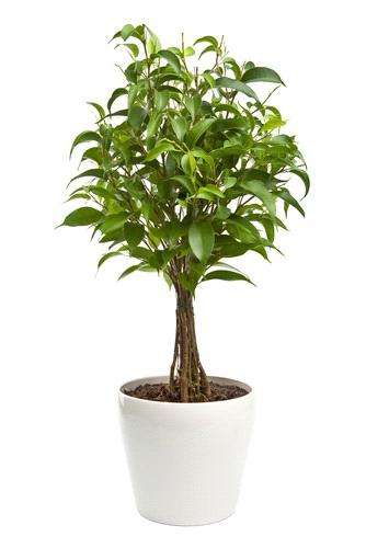 Le piante tropicali che non soffrono il clima casalingo