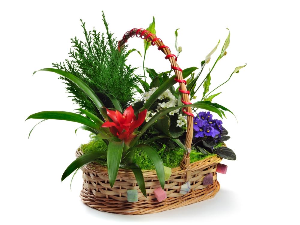 Fiori da regalare for Fiori e piante online