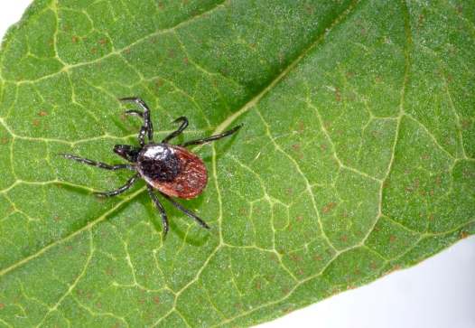 Come difendersi dai parassiti per le piante