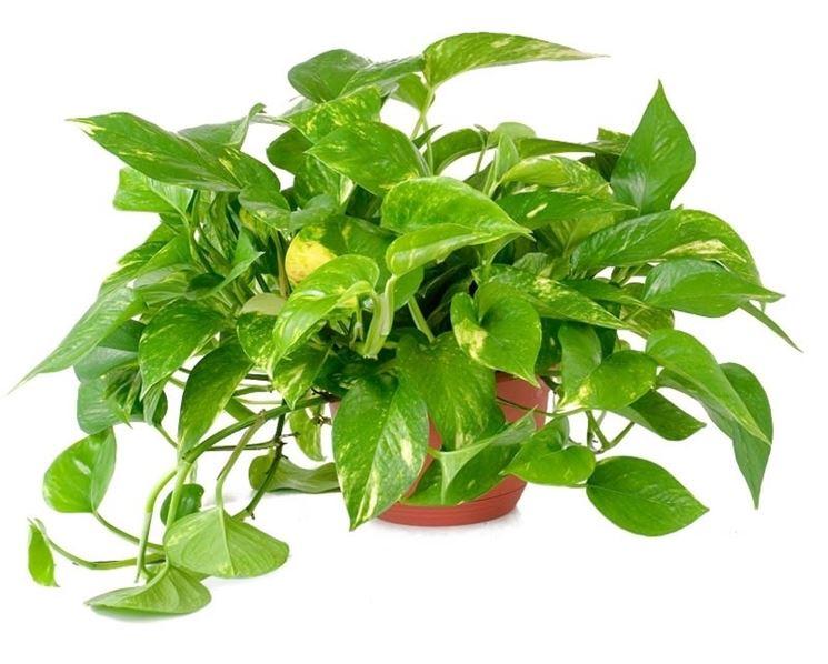 Spedire piante all'estero: consegna in tutto il Mondo