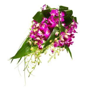 Mazzo di orchidee dendrobium