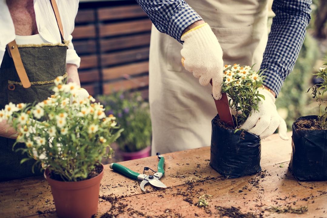 Piante fiorite online: scopri i nostri consigli